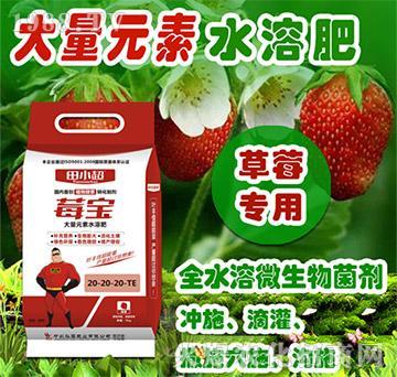 草莓专用大量元素水溶肥-莓宝-田小超