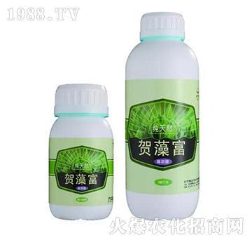 贺藻富-微新生物