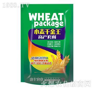 小麦高产套餐-小麦千金王-康丰农业