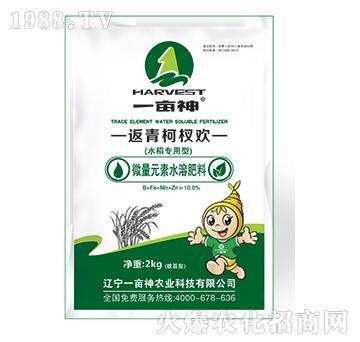 水稻专用型返青柯杈欢-