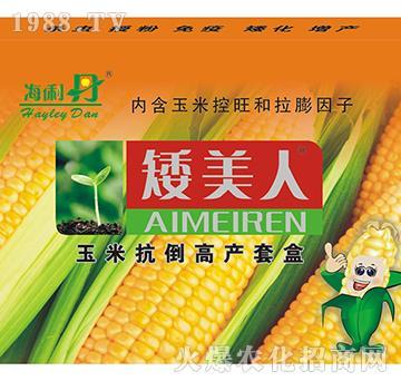 玉米抗倒高�a套盒-矮美人-海利丹