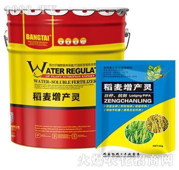 稻麦增产灵-绿邦农化