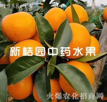 中药肥砂糖橘(成果)-新桔园
