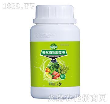 天然植物海藻液-菲爾普斯