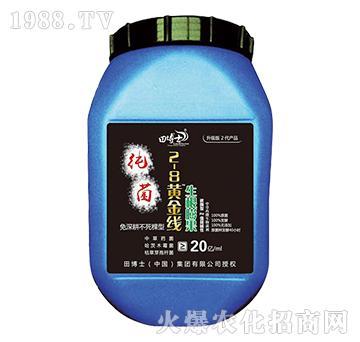 生根膨果纯菌-2-8黄金线-田博士