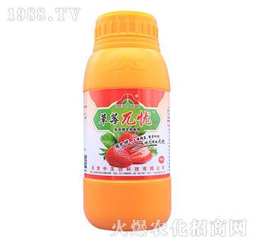 新型微生物制剂-(红中柱病)草莓兀忧-中龙创