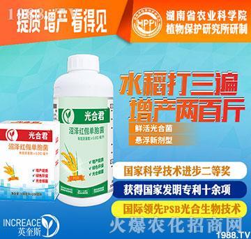 水稻增产微生物菌剂-光合君-英奎斯生物