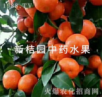 中医农业的药肥效果(成果1)-新桔园