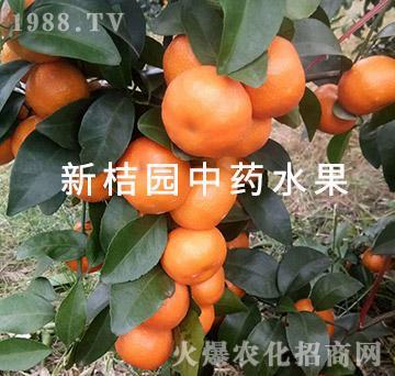 中医农业的药肥效果-新桔园