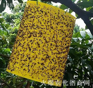 粘蟲板-悅地豐