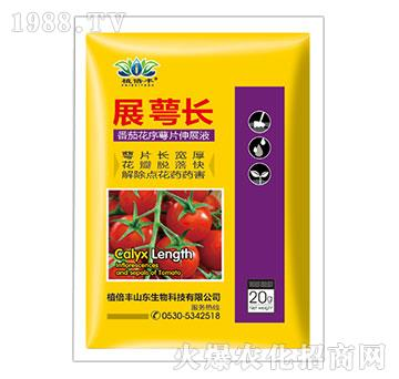 番茄花序萼片伸展液-展萼长