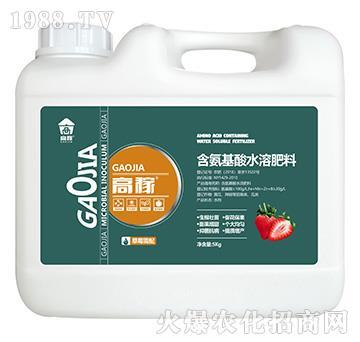 草莓需配含氨基酸水溶肥料-高稼