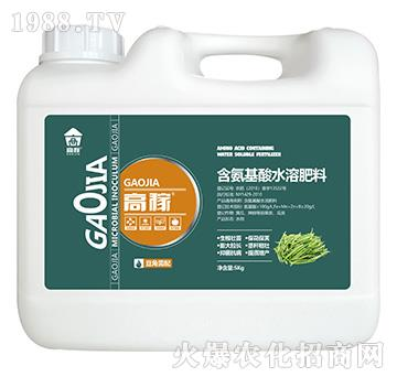 豆角需配含氨基酸水溶肥料-高稼