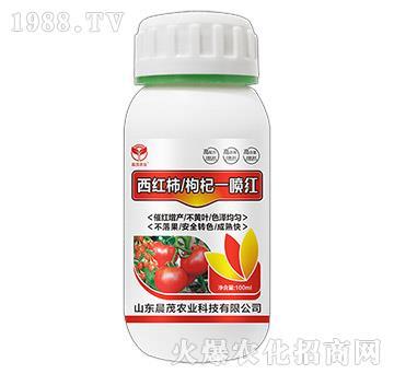 西紅柿枸杞一噴紅-晨茂農業