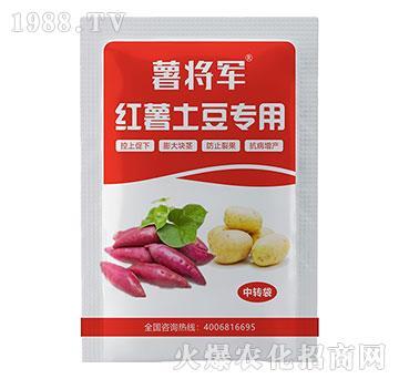 红薯甘薯土豆控旺膨大素-绿仕生物