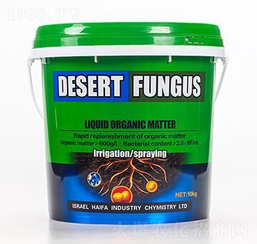 沙漠菌2號-海法