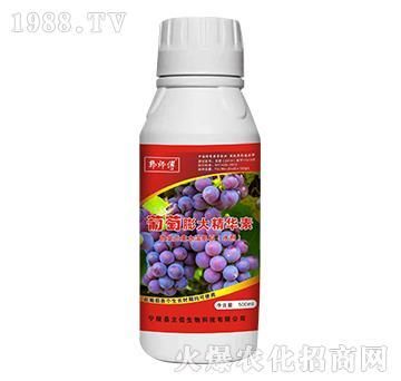 葡萄膨大精华素-郭师傅-立信生物