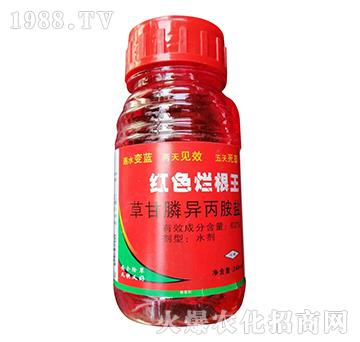62%草甘膦异丙胺盐-红色烂根王-欧迪亚