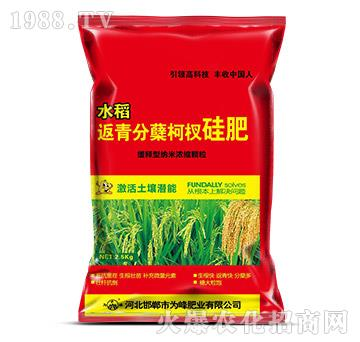 水稻返青分蘖柯杈肥-为
