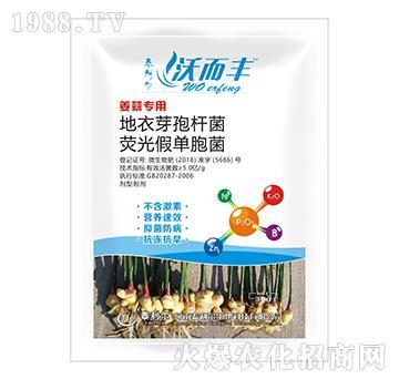 姜蒜专用荧光・地衣芽孢