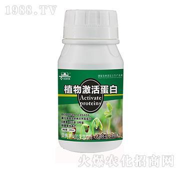 植物蛋白-贝多丰