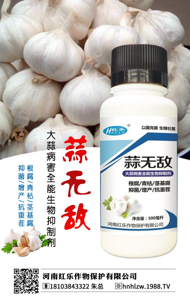 大蒜病害全能生物抑制剂-蒜无敌-红乐