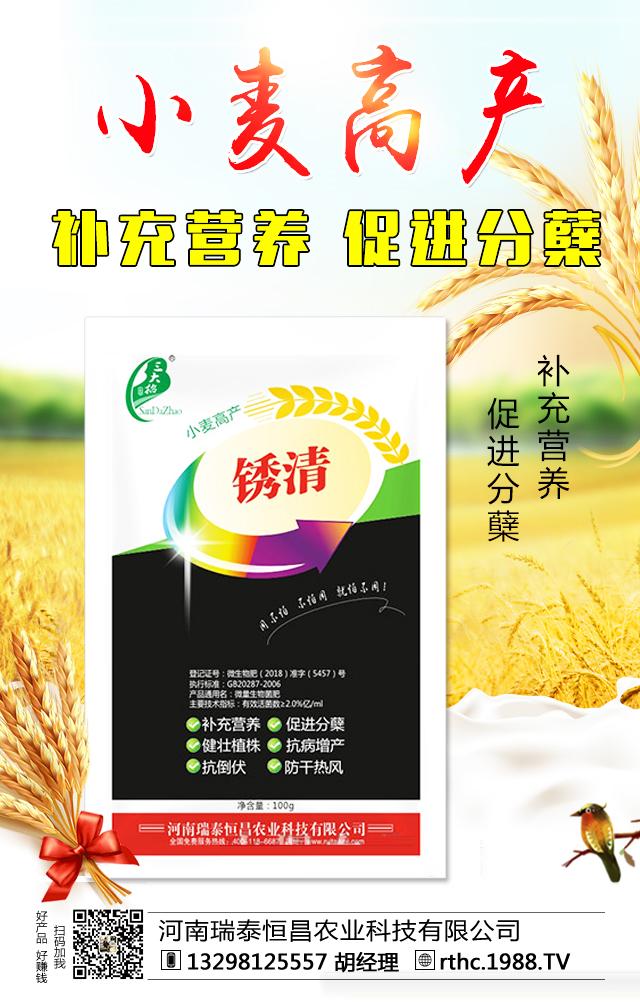 小麦高产-锈清-瑞泰恒昌