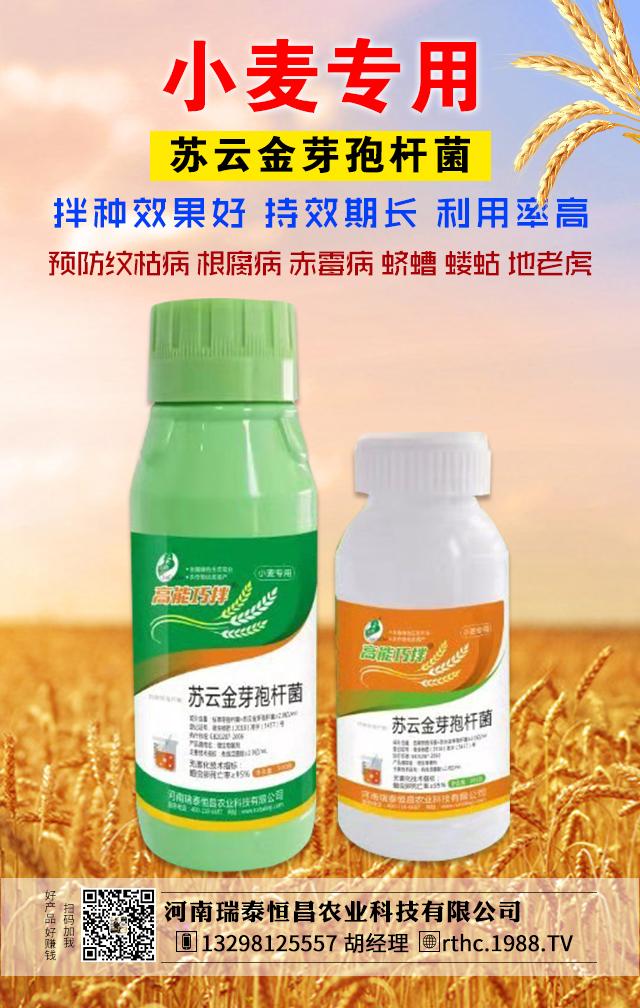 微生物菌剂-高能巧拌小麦-瑞泰恒昌