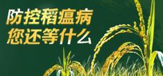 水稻稻瘟病防治