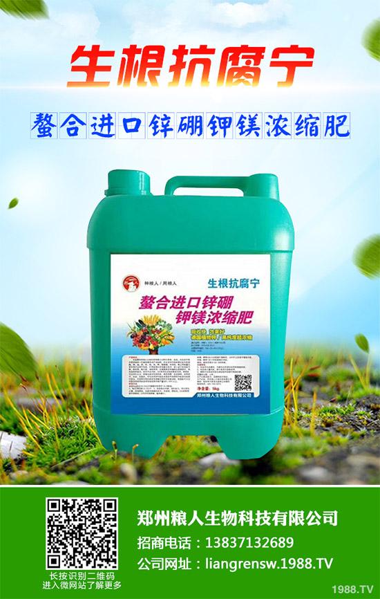 朝鲜蓟的种植方法图片