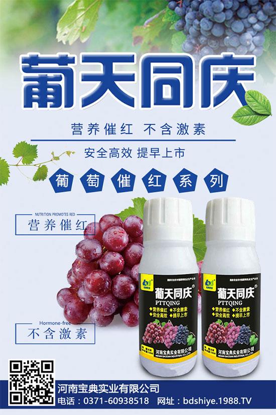 葡萄上色的关键因素,学会果价翻两番!