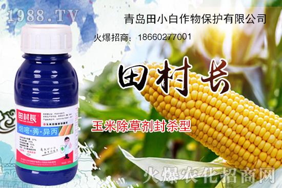 玉米杂草难防除,该怎么打?玉米除草产品推荐!