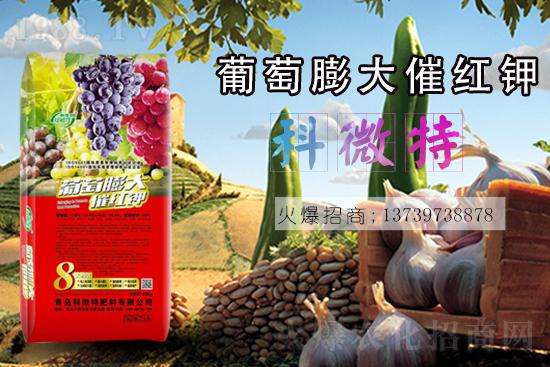 葡萄使用什么肥膨果快上色好?葡萄膨果转色期管理重点!